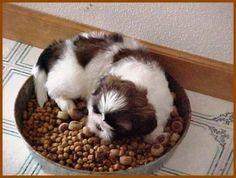 Цена котенка ч4