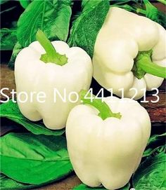 Chilli Pepper Vegetable Organic Sweet paprika chili bonsais bonsai plants home garden Healthy Fruits And Vegetables, Fruit And Veg, Pepper Seeds, Palmiers, Stuffed Sweet Peppers, Fruit Garden, Kraut, Fruit Trees, Planting Flowers