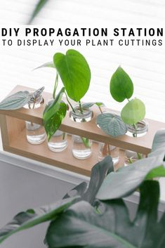A DIY plant propagation station is a cute way to display plants while propagating them in water. The glass tubes also help you monitor root development! #plantpropagation #propagationstation Plants In Jars, Water Plants, Propagating Succulents, Plant Propagation, Hanging Pots, Diy Hanging, Diy Interior, Plant In Glass, Avocado Plant
