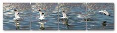 Panorama of a Seagull Fishing