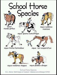 School Horse Species