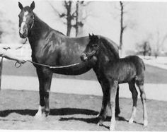 1924 Preakness Stakes winner Nellie Morse with her 1932 American Flag filly The filly, later named Nellie Flag, would go on to become the Champion Juvenile Filly of 1934 after winning the Selima Stakes, Matron Stakes, and the Kentucky Jockey Club Stakes