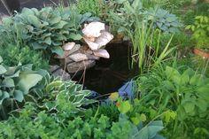 Shade Garden Pond