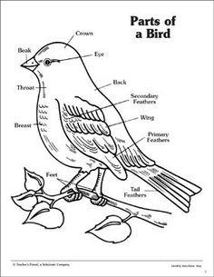 printable bird anatomy worksheet science worksheets birds learning