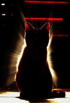 Penso che la ragione per la quale ammiriamo i gatti, parlo per coloro che condividono questo sentimento, sia la loro capacità di essere sempre un passo avanti agli altri, indipendentemente da quello che stanno facendo o fingono di fare...   Forse segretamente li invidiamo..    - Barbara Webster