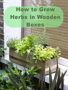 #Gardening : How to grow #herbs in wooden boxes #growherbs #herbs