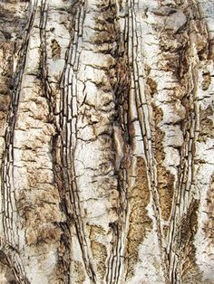 tree #bark http://johnpirilloauthor.blogspot.com/