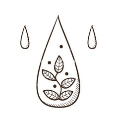 Water drop with leaves within vector by Chuhail on VectorStock®