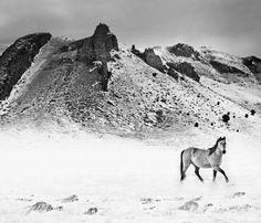 Montana Mountains//