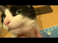 Cat Welcomes Human Home - So Cute!