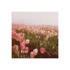 I'm just a boy, I'm not a hero. ❤ liked on Polyvore featuring flowers, backgrounds, pictures, photos, pink and filler