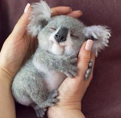 - Trending Still Arts & Designs for 2019 - Serena Slytherin - Nice wool koala. - Trending Still Arts & Designs for 2019 Nice wool koala. still arts cuteanimals koala needlefeltedanimals needlefelting woolfelt - Baby Animals Super Cute, Cute Little Baby, Cute Little Animals, Cute Funny Animals, Cute Cats, Cute Babies, Cutest Animals, Funny Dogs, Funny Koala