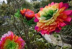 large crepe paper flowers