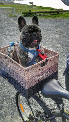 french bulldog life jacket french bulldog life vest cute critters