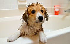 cachorro en la bañera