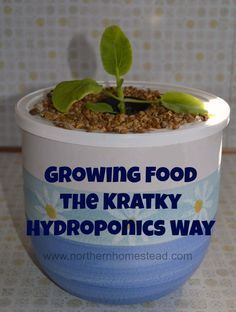 Start growing food the the Kratky hydroponics way today! It is a simple and fun container gardening method suited for off-the-grid and water saving growing.