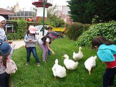 طلاب الروضة في رحلة مميزة بمناسبة انتهاء العام الدراسي مدرسة المنارة باسطنبول
