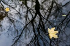 Last leaves of autumn, Park Lazienkowski, Warsaw