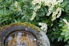 Nature Photography Stone Bird Bath with by overthefenceart on Etsy, $4.00