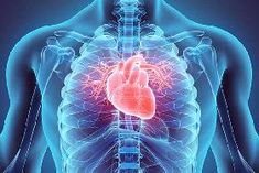 heart attack threat aspects, what are the signs and symptoms as well as the most effective all-natural means to reduce the risk of cardiovascular disease What Is Heart Disease, Signs Of Heart Disease, Heart Disease Symptoms, Heart Attack Symptoms, Causes Of Heart Attack, Signs Of Heart Attack, Cannabis, Heart Attack Treatment, Human Body