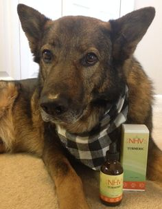 Pet Product Review for NHV Natural Pet Products  on Turmeric has so many benefits for pets, find our more about it on our blog.