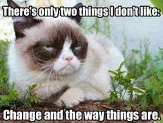 Grumpy cat doesn't like change