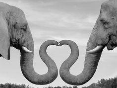 Elephant Trunk Heart