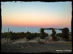 Bonito atardecer en #Contiempo con la luna llena... #enoturismo