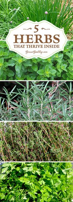Grow Herbs Indoors: 5 Herbs that Thrive Inside All Winter
