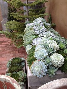 Succulent trough at Rogers Garden