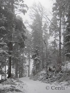 Centi bastelt: Doch noch Winter