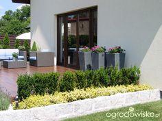 Ogród Tosi - strona 310 - Forum ogrodnicze - Ogrodowisko