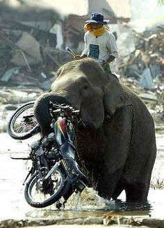 Elephants and motorcycles