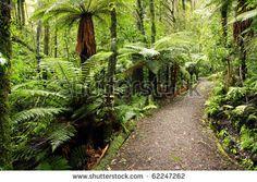 Footpath - Shutterstock 6