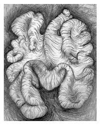 walnut drawing - Google Search