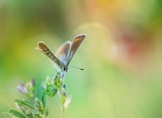 awesome 30+ Beautiful Blue Butterfly Photography