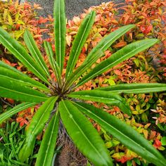 Season Colors, Colours, Seasons, Garden, Plants, Garten, Seasons Of The Year, Lawn And Garden, Gardens