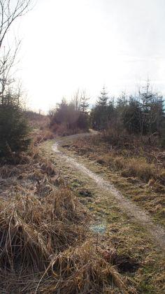Fußweg entlang des Roten Moors in der Rhön
