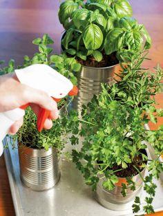 Grow Your Own Kitchen Countertop Herb Garden  - on HGTV