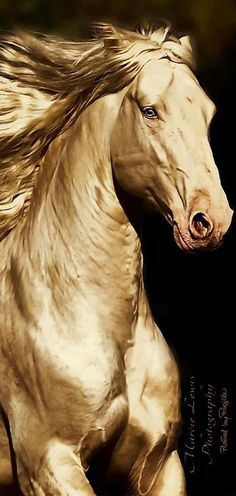 Horse Art - The Golden Horse - by Marcie Lewis - from Regilla Most Beautiful Horses, All The Pretty Horses, Beautiful Creatures, Animals Beautiful, Animals And Pets, Cute Animals, Akhal Teke Horses, Golden Horse, Majestic Horse