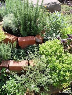 You can grow a lot of herbs in a very small amount of space by using a specially designed planting bed called an herb spiral. Find step-by-step building and planting instructions here, plus some creative ideas for the best materials to make an herb spiral. #herbgardening #gardeningtips Herb Spiral, Spiral Garden, Growing Gardens, Growing Herbs, Garden Soil, Raised Garden Beds, Types Of Basil, Easy Herbs To Grow, Landscape Pavers