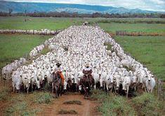 I LOVE MS OFICIAL - Movimento de amor por Mato Grosso do Sul: Você sabe o que é uma Comitiva Pantaneira e qual a...