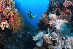 The crevasse less traveled. Spirit of Freedom, Coral Sea Trip, Cairns, Australia!