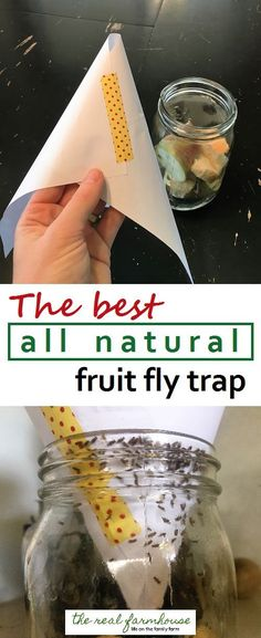 How to get rid of fruit flies naturally- the best way. Results in 5 minutes!