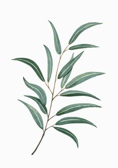 Plantas en papel I on Behance