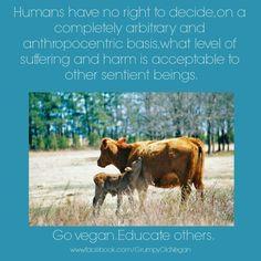 go #vegan and nobody gets hurt