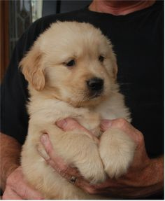 This is what our sweet Granddog Max looked like the first time we saw her. <3