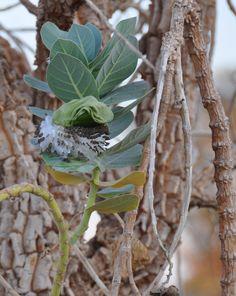 Plantas en extincion yahoo dating