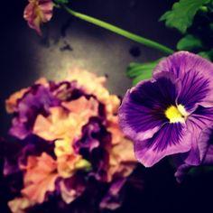 http://flowerlittle.jp/