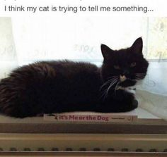Cats trying to say something
